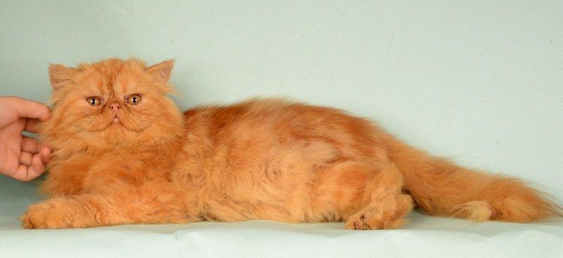 Nằm Mơ thấy mèo là điềm báo lành hay dữ ? con mèo là số mấy ?