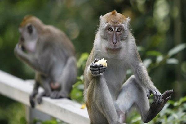 Con Khỉ số mấy ? Nằm mơ thấy Khỉ đánh con gì ? Tốt hay Xấu ?